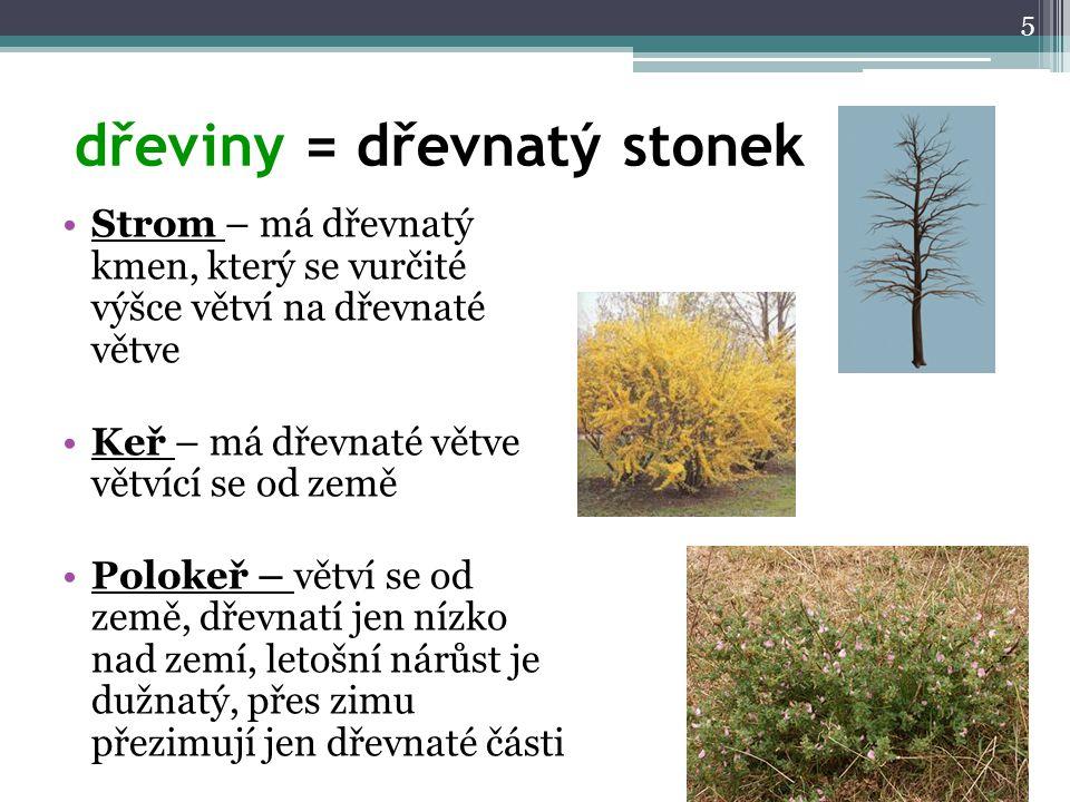 dřeviny = dřevnatý stonek Strom – má dřevnatý kmen, který se vurčité výšce větví na dřevnaté větve Keř – má dřevnaté větve větvící se od země Polokeř
