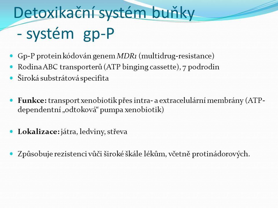 Detoxikační systém buňky - systém gp-P Gp-P protein kódován genem MDR1 (multidrug-resistance) Rodina ABC transporterů (ATP binging cassette), 7 podrod
