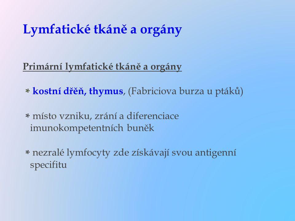 Lymfatické tkáně a orgány Primární lymfatické tkáně a orgány * kostní dřěň, thymus, (Fabriciova burza u ptáků) * místo vzniku, zrání a diferenciace im