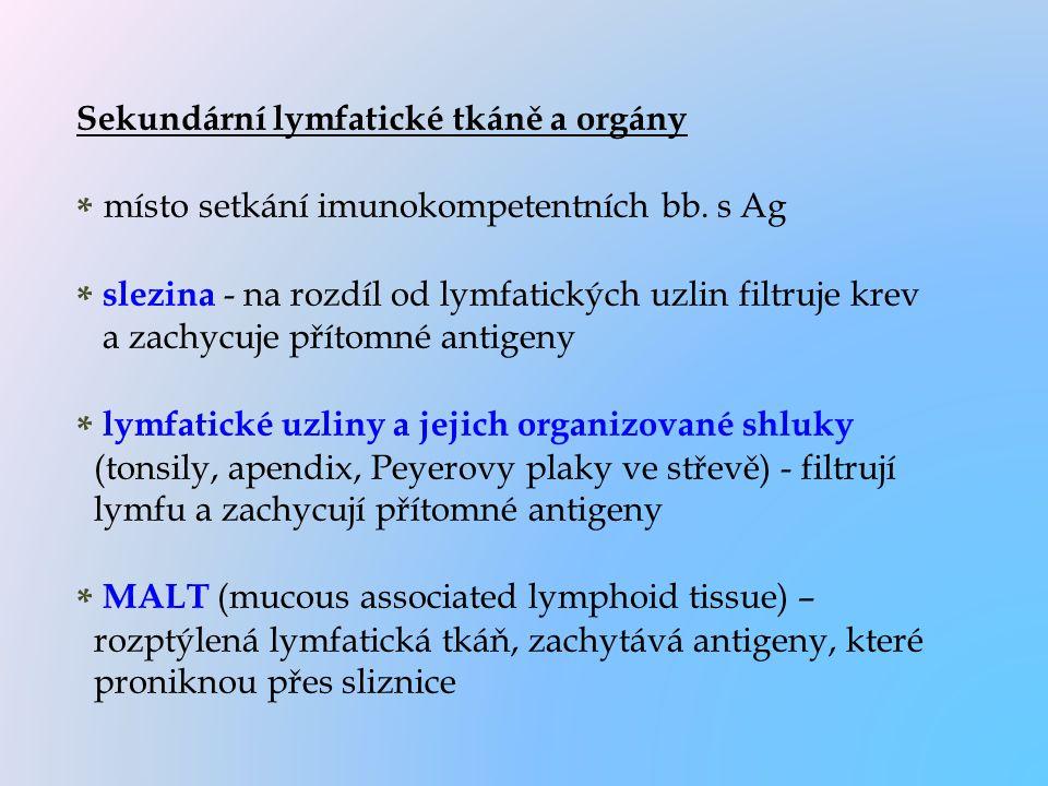 Sekundární lymfatické tkáně a orgány * místo setkání imunokompetentních bb. s Ag * slezina - na rozdíl od lymfatických uzlin filtruje krev a zachycuje