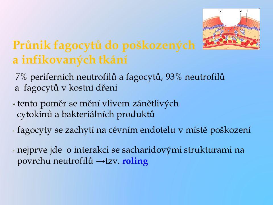 Průnik fagocytů do poškozených a infikovaných tkání 7% periferních neutrofilů a fagocytů, 93% neutrofilů a fagocytů v kostní dřeni * tento poměr se mě