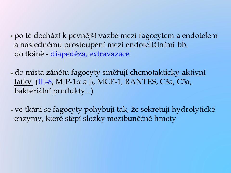 * po té dochází k pevnější vazbě mezi fagocytem a endotelem a následnému prostoupení mezi endoteliálními bb. do tkáně - diapedéza, extravazace * do mí
