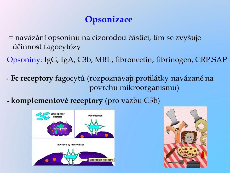 = navázání opsoninu na cizorodou částici, tím se zvyšuje účinnost fagocytózy Opsoniny: IgG, IgA, C3b, MBL, fibronectin, fibrinogen, CRP,SAP * Fc recep