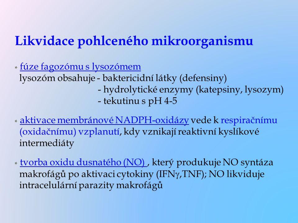 Likvidace pohlceného mikroorganismu * fúze fagozómu s lysozómem lysozóm obsahuje - baktericidní látky (defensiny) - hydrolytické enzymy (katepsiny, ly