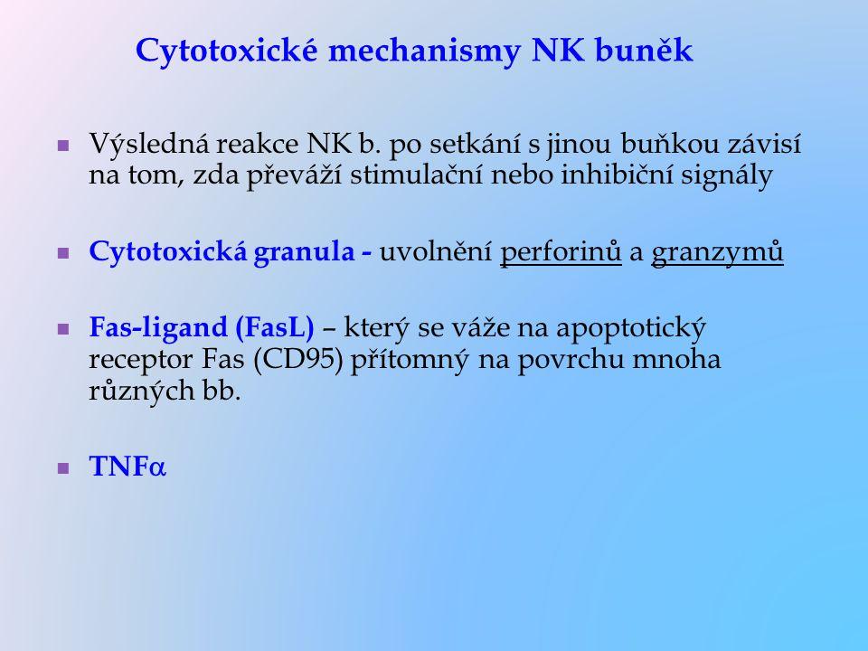 Výsledná reakce NK b. po setkání s jinou buňkou závisí na tom, zda převáží stimulační nebo inhibiční signály Cytotoxická granula - uvolnění perforinů