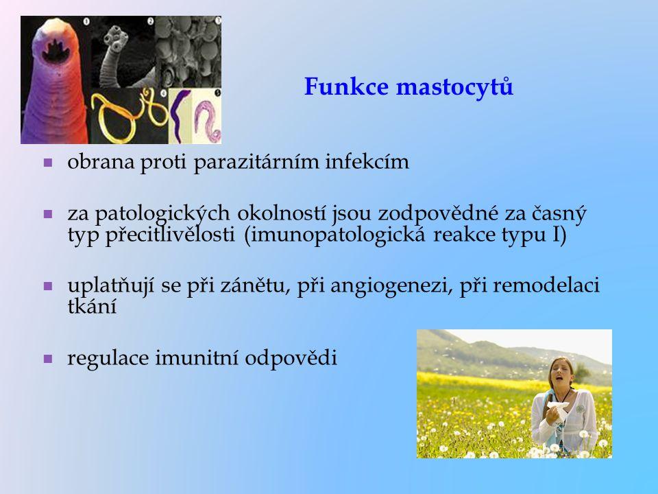 Funkce mastocytů obrana proti parazitárním infekcím za patologických okolností jsou zodpovědné za časný typ přecitlivělosti (imunopatologická reakce t