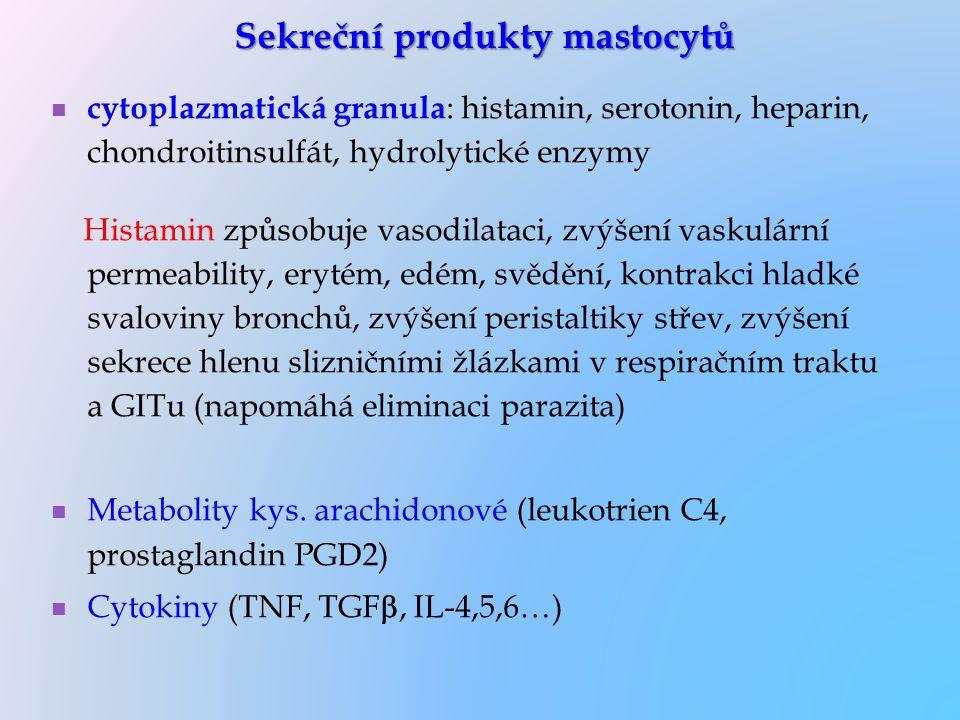 Sekreční produkty mastocytů cytoplazmatická granula : histamin, serotonin, heparin, chondroitinsulfát, hydrolytické enzymy Histamin způsobuje vasodila