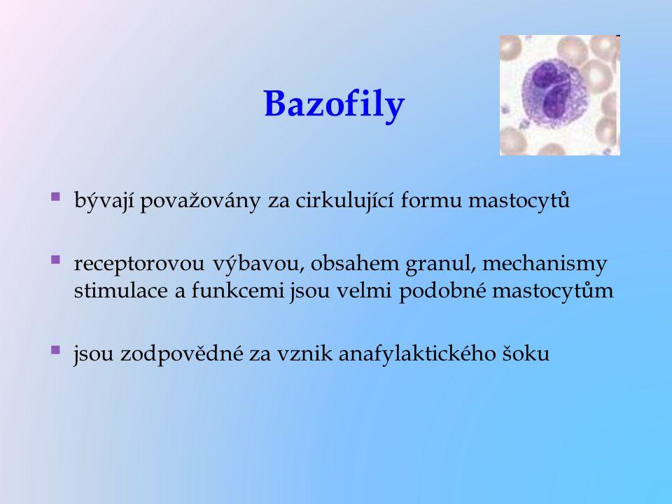 Bazofily   bývají považovány za cirkulující formu mastocytů   receptorovou výbavou, obsahem granul, mechanismy stimulace a funkcemi jsou velmi pod