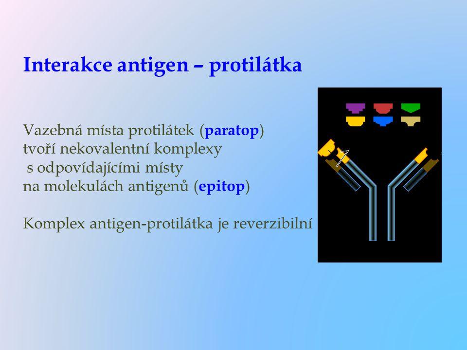 Interakce antigen – protilátka Vazebná místa protilátek ( paratop ) tvoří nekovalentní komplexy s odpovídajícími místy na molekulách antigenů ( epitop