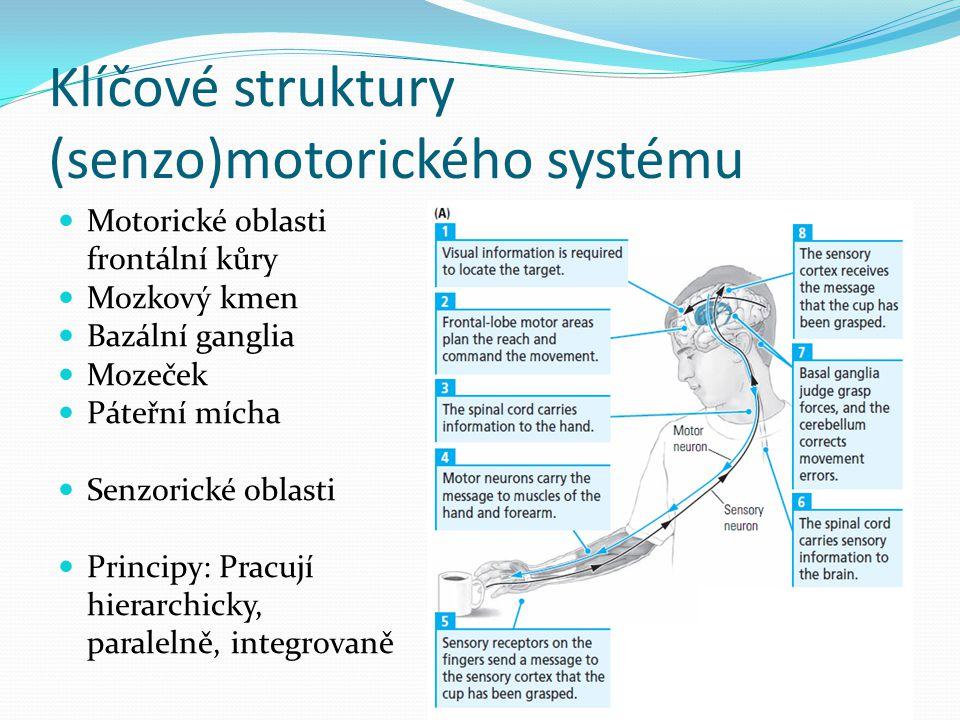 Klíčové struktury (senzo)motorického systému Motorické oblasti frontální kůry Mozkový kmen Bazální ganglia Mozeček Páteřní mícha Senzorické oblasti Pr