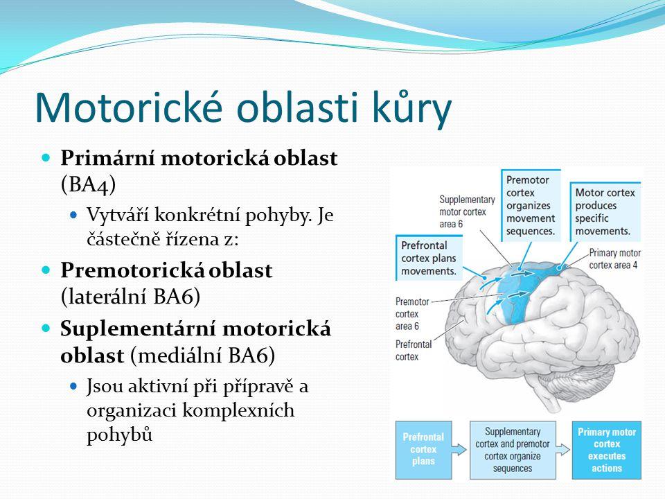 Somatotopické uspořádání BA4 Disproporcionální reprezentace různých částí svalů v motorické kůře dle jejich motorického významu Motorický homunkulus Dnes asi deset homunkulů – korové reprezentace jsou distribuované a překrývají se Elektrická stimulace BA4 ve výkumech W.