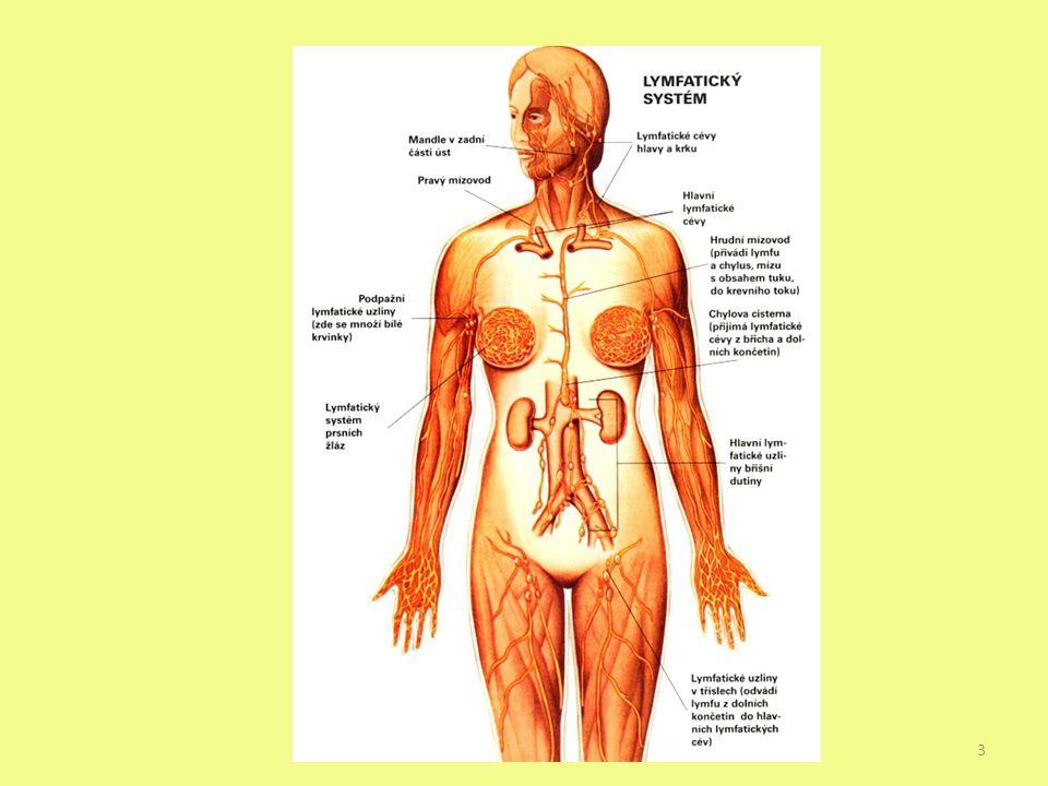 Míza – lymfa (vznik z tkáňového moku) – odvádí z tkání zplodiny metabolismu do žilní krve (denně 2-3l) Obsahuje lymfocyty Začíná slepě mízními vlásečnicemi → mízní cévy → mízní kmeny → mízovody (ústí do horní duté žíly) Pravostranný kmen mízní, hrudní mízovod 4