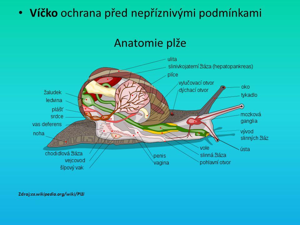 Víčko ochrana před nepříznivými podmínkami Anatomie plže Zdroj:cs.wikipedia.org/wiki/Plži