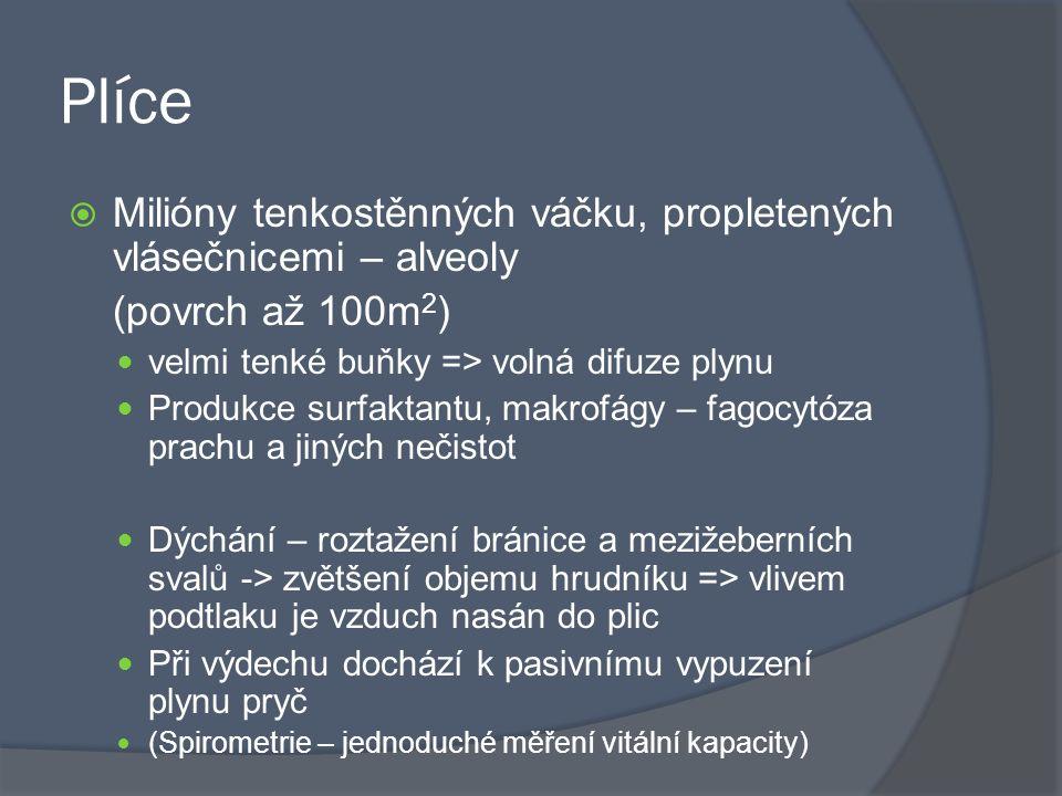 Plíce  Milióny tenkostěnných váčku, propletených vlásečnicemi – alveoly (povrch až 100m 2 ) velmi tenké buňky => volná difuze plynu Produkce surfaktantu, makrofágy – fagocytóza prachu a jiných nečistot Dýchání – roztažení bránice a mezižeberních svalů -> zvětšení objemu hrudníku => vlivem podtlaku je vzduch nasán do plic Při výdechu dochází k pasivnímu vypuzení plynu pryč (Spirometrie – jednoduché měření vitální kapacity)