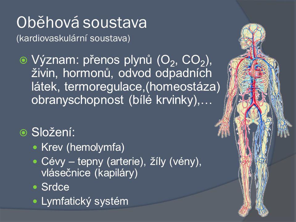 Oběhová soustava (kardiovaskulární soustava)  Význam: přenos plynů (O 2, CO 2 ), živin, hormonů, odvod odpadních látek, termoregulace,(homeostáza) obranyschopnost (bílé krvinky),…  Složení: Krev (hemolymfa) Cévy – tepny (arterie), žíly (vény), vlásečnice (kapiláry) Srdce Lymfatický systém