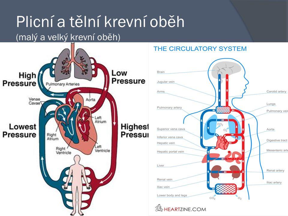 Plicní a tělní krevní oběh (malý a velký krevní oběh)