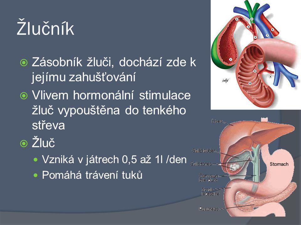 Žlučník  Zásobník žluči, dochází zde k jejímu zahušťování  Vlivem hormonální stimulace žluč vypouštěna do tenkého střeva  Žluč Vzniká v játrech 0,5 až 1l /den Pomáhá trávení tuků