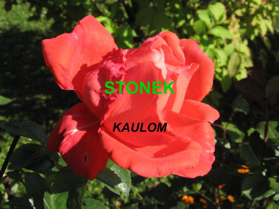 Nadzemní, článkovaná část rostliny Funkce: - nese listy + reprodukční org.