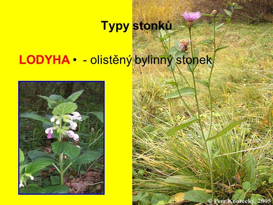 Typy stonků - olistěný bylinný stonekLODYHA
