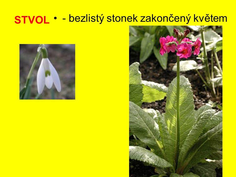 STVOL - bezlistý stonek zakončený květem