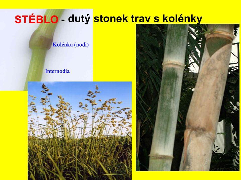 STÉBLO - dutý stonek trav s kolénky