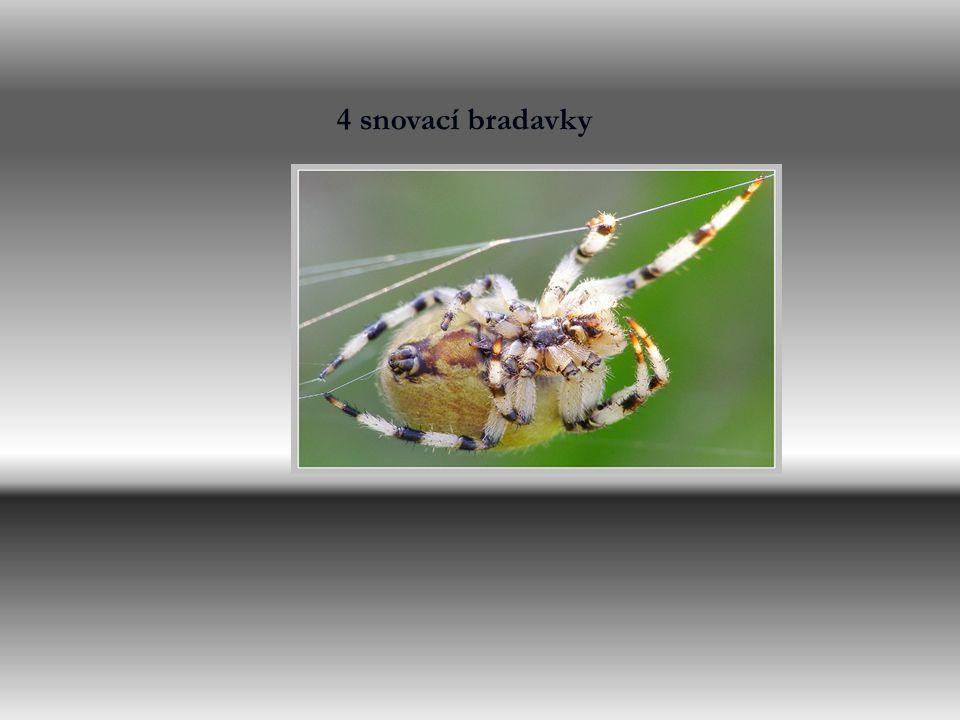 Zástupci pavouků Křižák obecný o Pokoutník tmavý Sklípkan