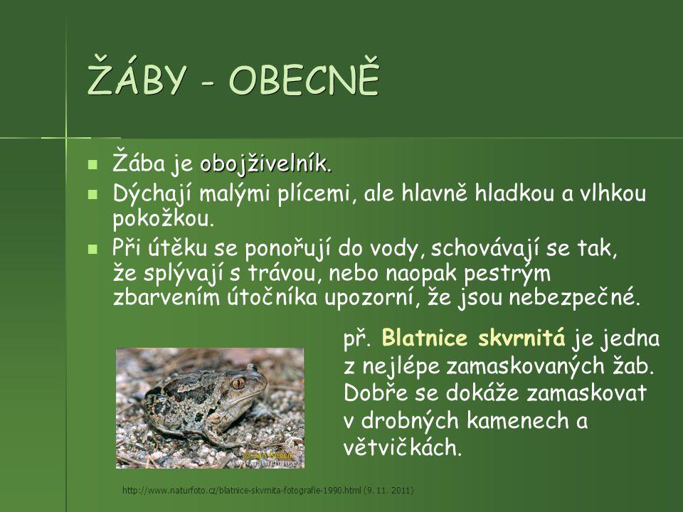 ŽÁBY - OBECNĚ obojživelník. Žába je obojživelník. Dýchají malými plícemi, ale hlavně hladkou a vlhkou pokožkou. Při útěku se ponořují do vody, schováv