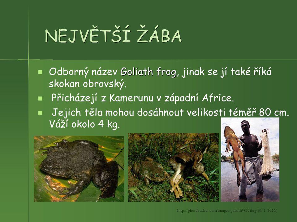 NEJVĚTŠÍ ŽÁBA Goliath frog Odborný název Goliath frog, jinak se jí také říká skokan obrovský. Přicházejí z Kamerunu v západní Africe. Jejich těla moho
