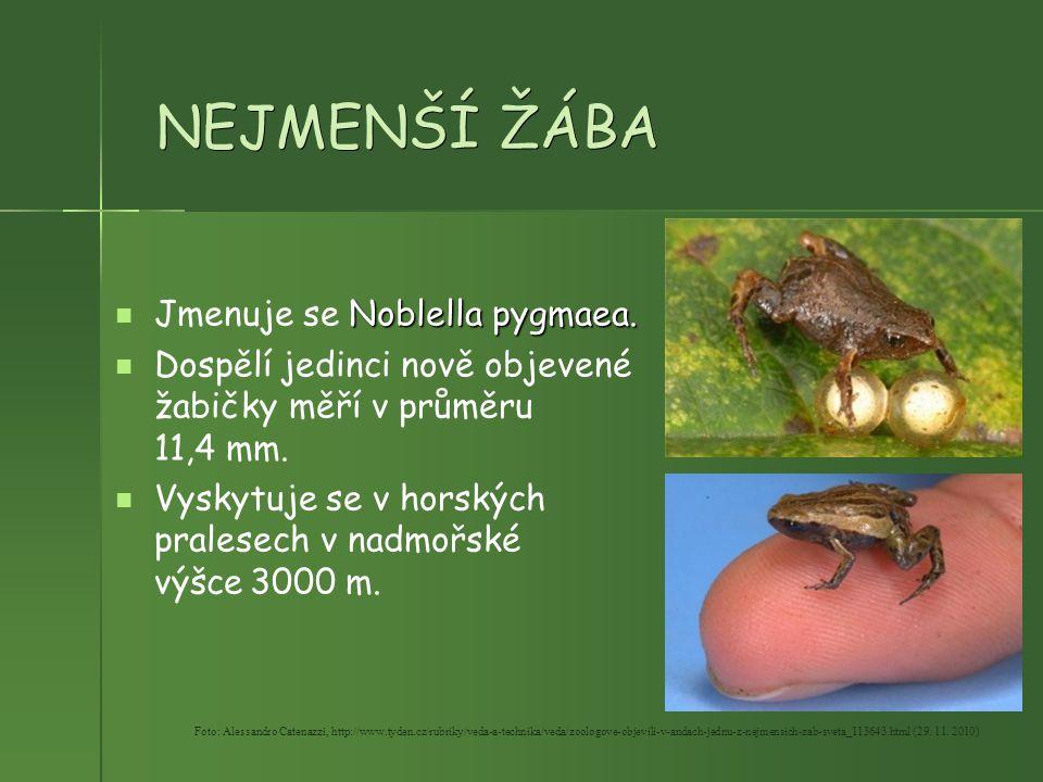 NEJMENŠÍ ŽÁBA Noblella pygmaea. Jmenuje se Noblella pygmaea. Dospělí jedinci nově objevené žabičky měří v průměru 11,4 mm. Vyskytuje se v horských pra