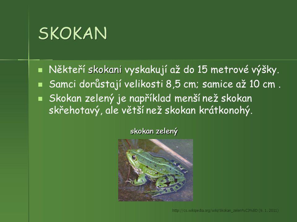 SKOKAN skokani Někteří skokani vyskakují až do 15 metrové výšky. Samci dorůstají velikosti 8,5 cm; samice až 10 cm. Skokan zelený je například menší n