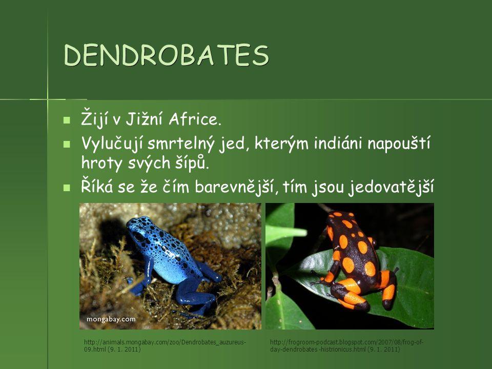 DENDROBATES Žijí v Jižní Africe. Vylučují smrtelný jed, kterým indiáni napouští hroty svých šípů. Říká se že čím barevnější, tím jsou jedovatější http
