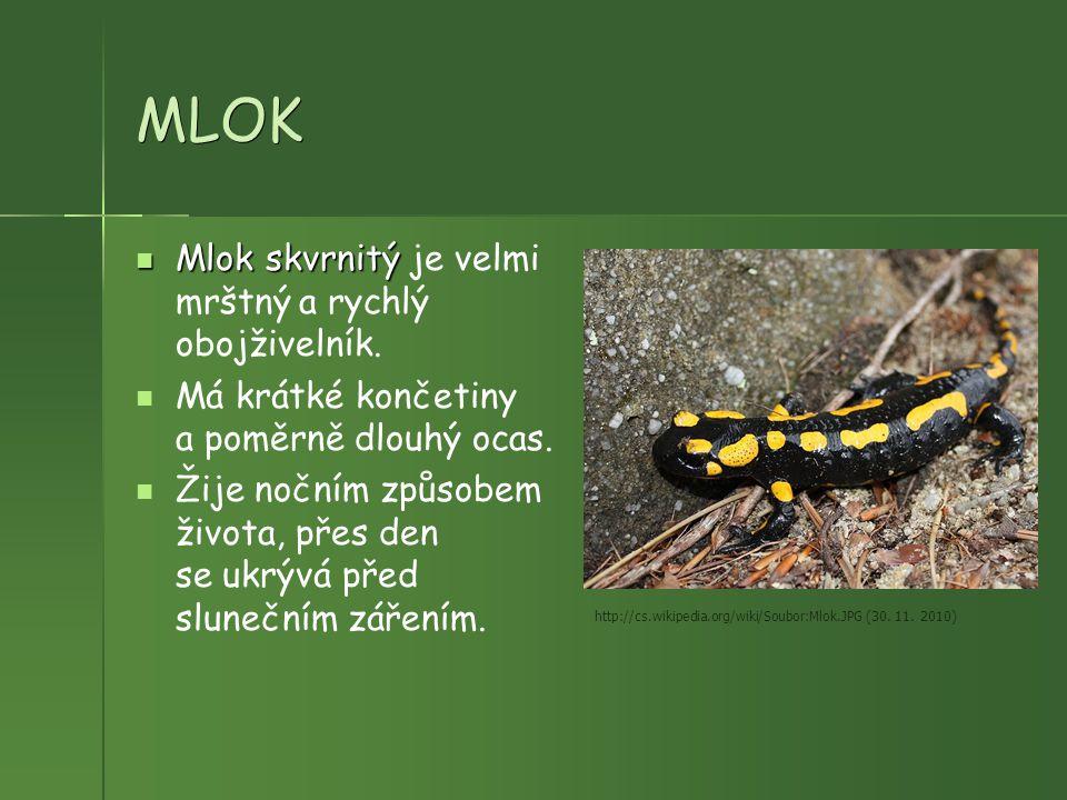 MLOK Mlok skvrnitý Mlok skvrnitý je velmi mrštný a rychlý obojživelník. Má krátké končetiny a poměrně dlouhý ocas. Žije nočním způsobem života, přes d