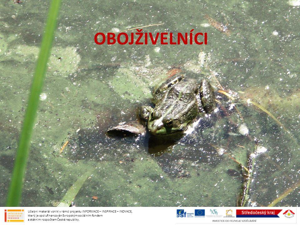 DRÁPATKA VODNÍ běžná akvarijní žába časté laboratorní zvíře používala se k těhotenským testům Učební materiál vznikl v rámci projektu INFORMACE – INSPIRACE – INOVACE, který je spolufinancován Evropským sociálním fondem a státním rozpočtem České republiky.
