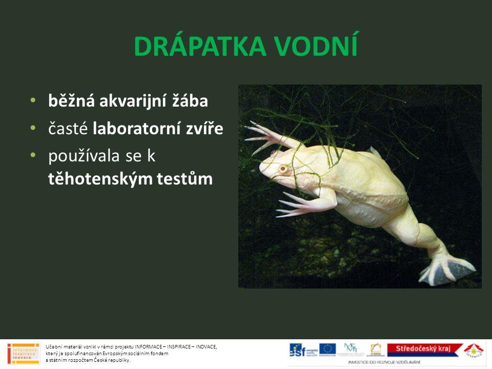 DRÁPATKA VODNÍ běžná akvarijní žába časté laboratorní zvíře používala se k těhotenským testům Učební materiál vznikl v rámci projektu INFORMACE – INSP