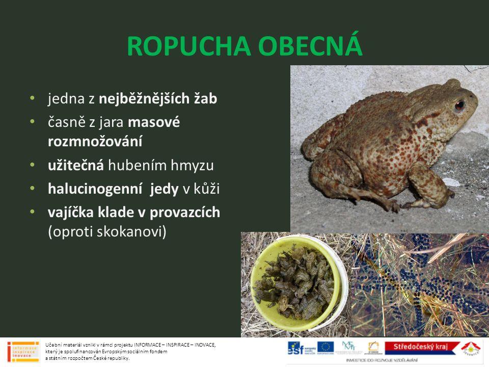ROPUCHA OBECNÁ jedna z nejběžnějších žab časně z jara masové rozmnožování užitečná hubením hmyzu halucinogenní jedy v kůži vajíčka klade v provazcích