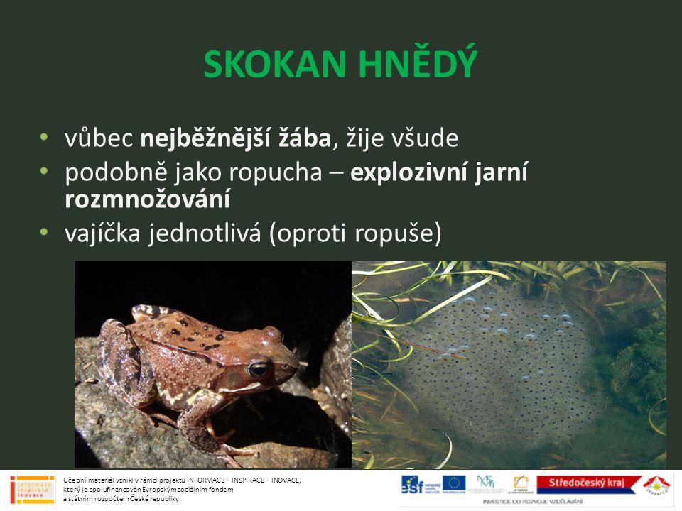 SKOKAN HNĚDÝ vůbec nejběžnější žába, žije všude podobně jako ropucha – explozivní jarní rozmnožování vajíčka jednotlivá (oproti ropuše) Učební materiá