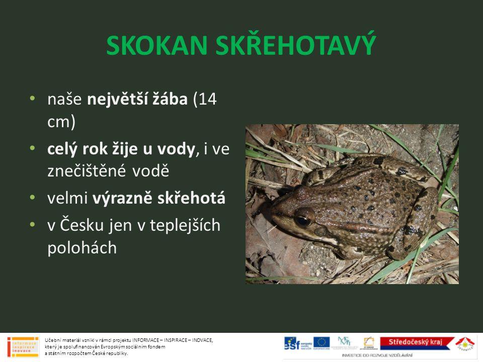 SKOKAN SKŘEHOTAVÝ naše největší žába (14 cm) celý rok žije u vody, i ve znečištěné vodě velmi výrazně skřehotá v Česku jen v teplejších polohách Učebn