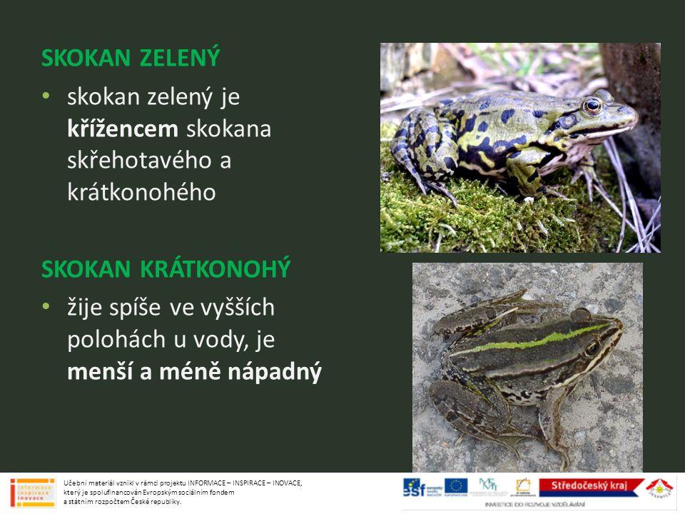 SKOKAN ZELENÝ skokan zelený je křížencem skokana skřehotavého a krátkonohého SKOKAN KRÁTKONOHÝ žije spíše ve vyšších polohách u vody, je menší a méně