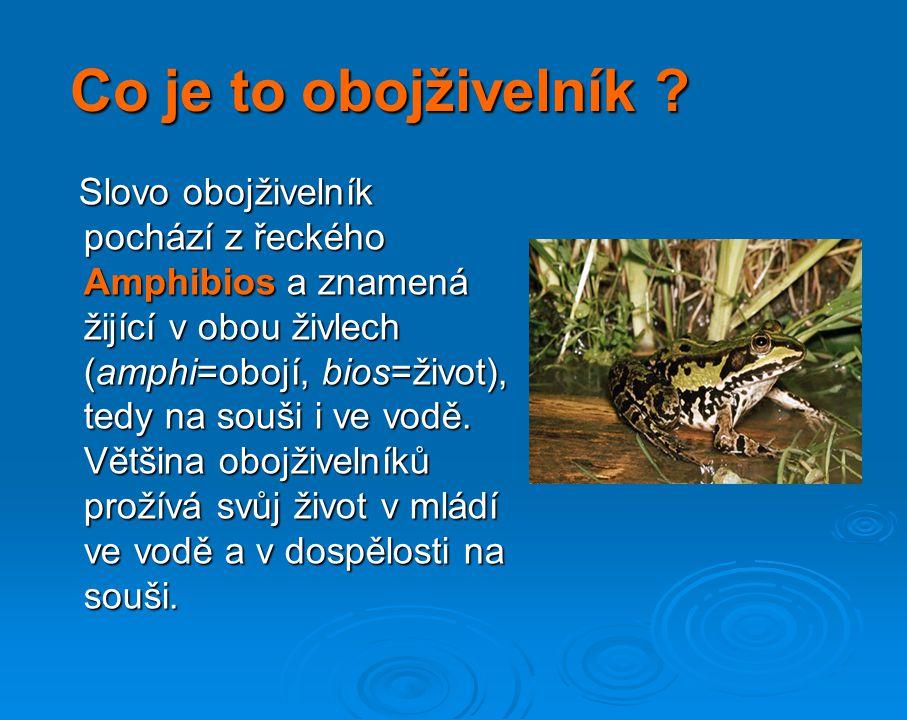 OBOJŽIVELNÍCI na území České Republiky Autor: Marcela Nováková