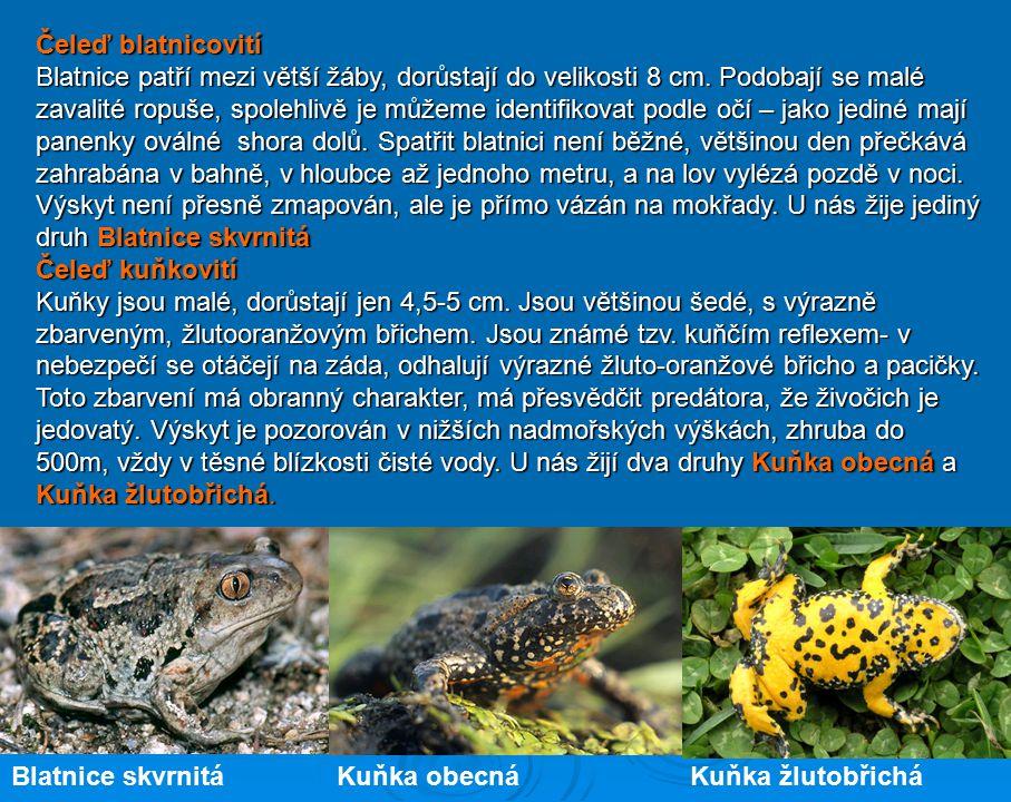 Na území České republiky žijí žáby pěti čeledí v několika druzích. Některé druhy jsou rozšířeny Na území České republiky žijí žáby pěti čeledí v někol