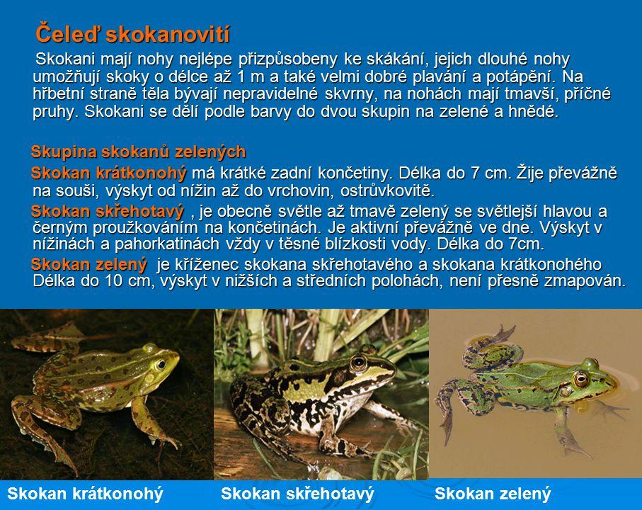 Čeleď blatnicovití Blatnice patří mezi větší žáby, dorůstají do velikosti 8 cm. Podobají se malé zavalité ropuše, spolehlivě je můžeme identifikovat p