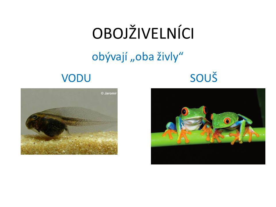 2 podtřídy: OCASATÍ BEZOCASÍ (žáby)