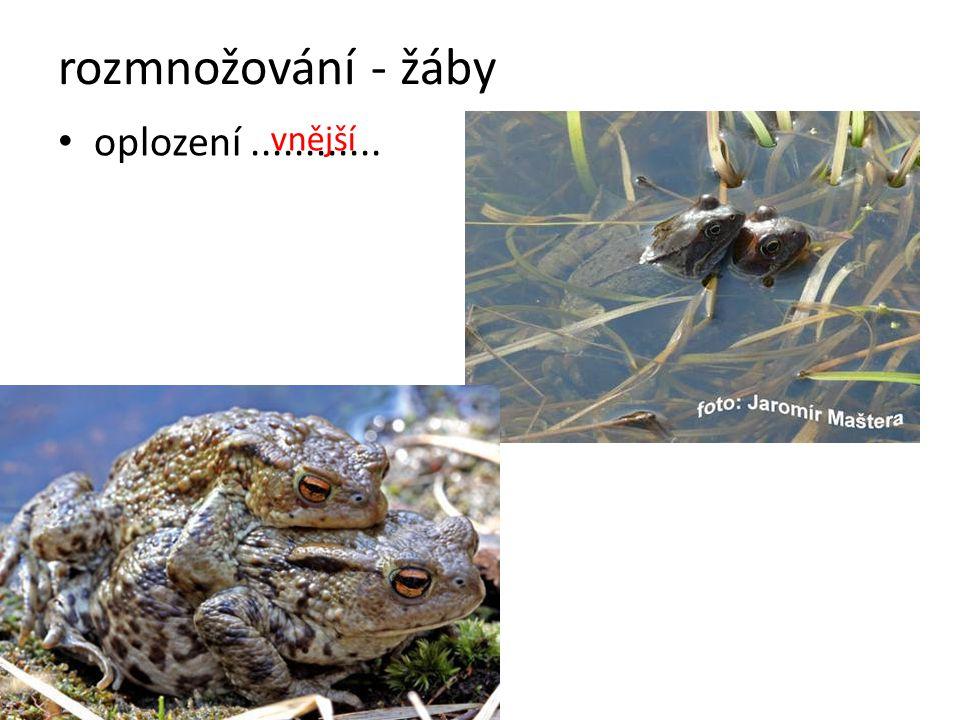 rozmnožování - žáby oplození............ vnější