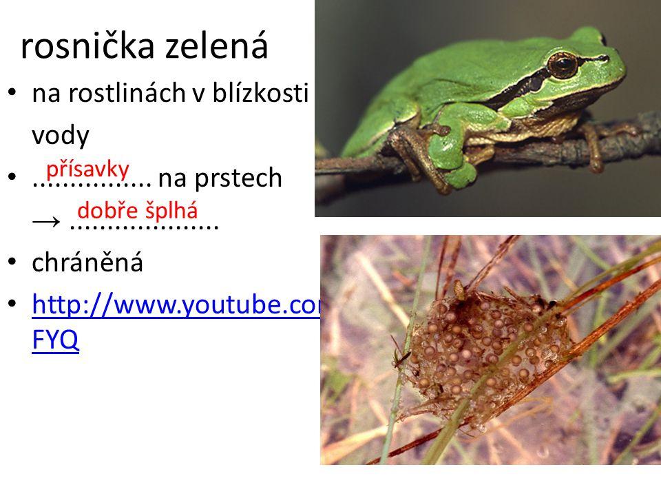 rosnička zelená na rostlinách v blízkosti vody................ na prstech →.................... chráněná http://www.youtube.com/watch?v=0PxZFGyk FYQ h