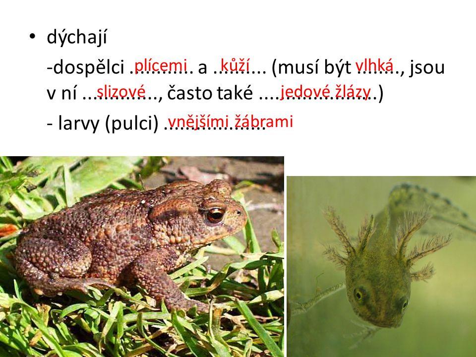potrava - dospělci a larvy ocasatých –.................