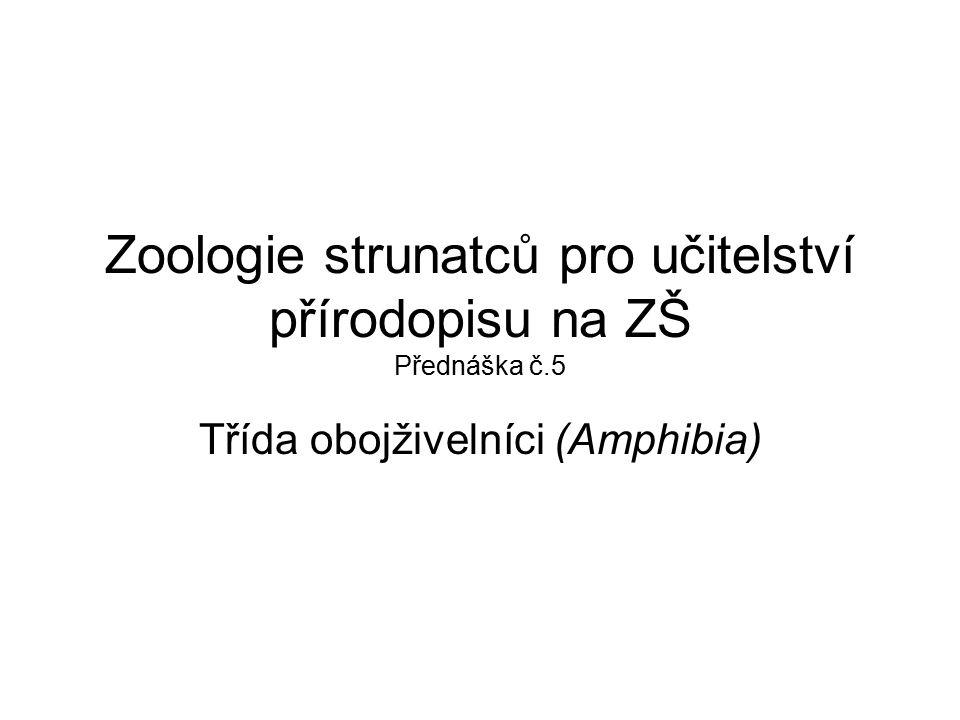 Zoologie strunatců pro učitelství přírodopisu na ZŠ Přednáška č.5 Třída obojživelníci (Amphibia)