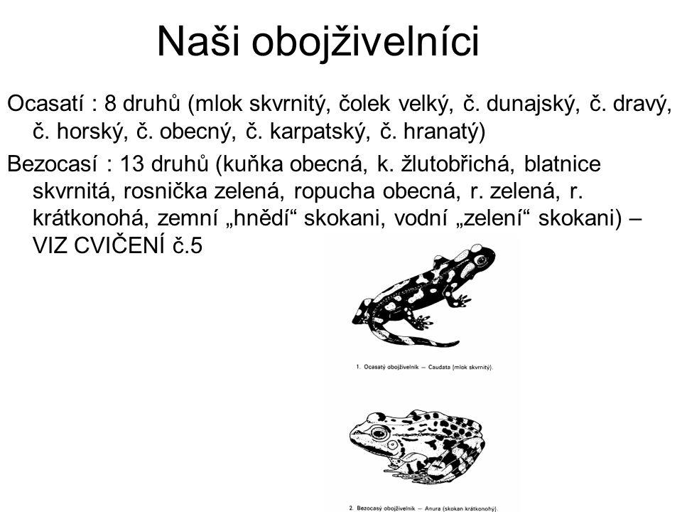 Naši obojživelníci Ocasatí : 8 druhů (mlok skvrnitý, čolek velký, č. dunajský, č. dravý, č. horský, č. obecný, č. karpatský, č. hranatý) Bezocasí : 13