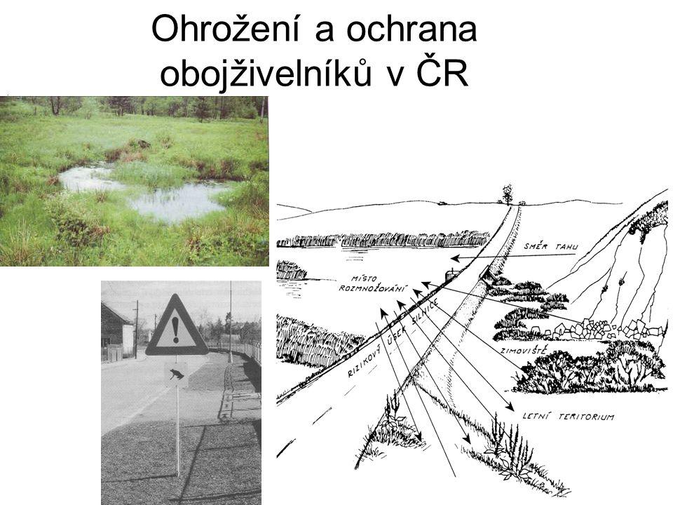 Ohrožení a ochrana obojživelníků v ČR i