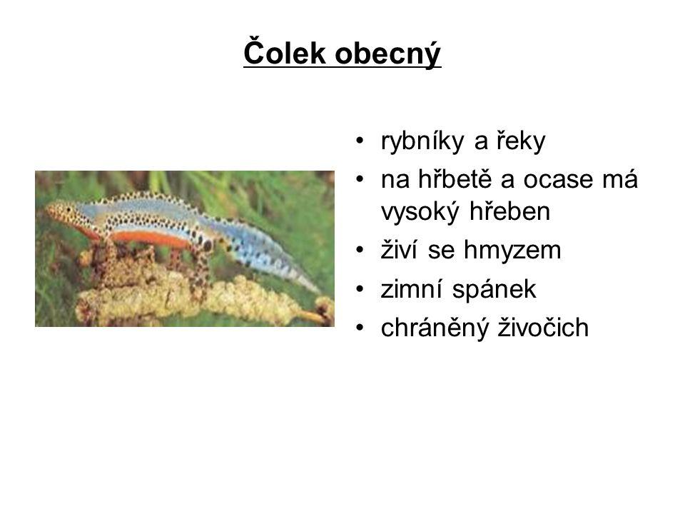 Čolek obecný rybníky a řeky na hřbetě a ocase má vysoký hřeben živí se hmyzem zimní spánek chráněný živočich