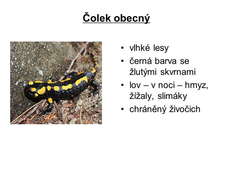 Čolek obecný vlhké lesy černá barva se žlutými skvrnami lov – v noci – hmyz, žížaly, slimáky chráněný živočich